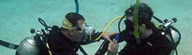 Khóa học lặn biển tại Nha Trang
